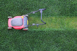 Lawn Disease and How to Prevent It