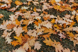 3 Reasons to Get Rid of Those Leaves