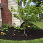 Mulch_ProScapes